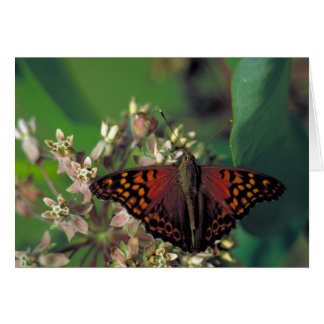 Tawny Emperor Butterfly on Common Milkweed Greeting Card