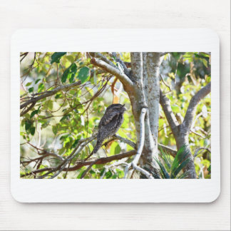 TAWNY FOGMOUTH RURAL QUEENSLAND AUSTRALIA MOUSE PAD