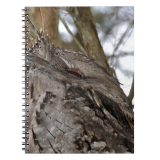 TAWNY FROG MOUTH OWL IN RURAL QUEENSLAND AUSTRALIA NOTEBOOK