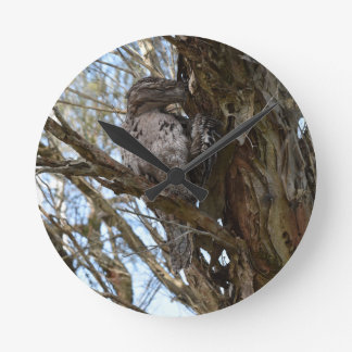 TAWNY FROGMOUTH FLUFFY HIS FEATHERS AUSTRALIA ROUND CLOCK