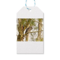 TAWNY FROGMOUTH IN TREE QUEENSALND AUSTRALIA GIFT TAGS
