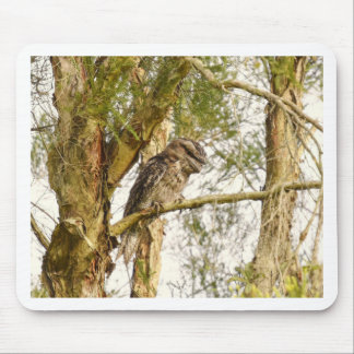 TAWNY FROGMOUTH IN TREE QUEENSALND AUSTRALIA MOUSE PAD