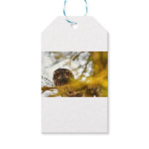 TAWNY FROGMOUTH OWL QUEENSLAND AUSTRALIA GIFT TAGS