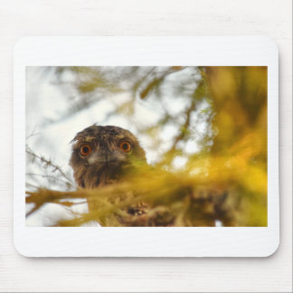 TAWNY FROGMOUTH OWL QUEENSLAND AUSTRALIA MOUSE PAD