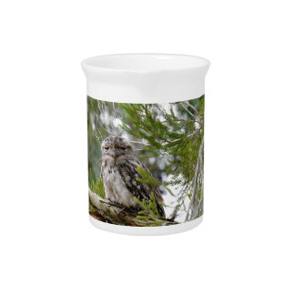 TAWNY FROGMOUTH OWL RURAL QUEENSLAND AUSTRALIA DRINK PITCHER