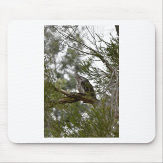 TAWNY FROGMOUTH OWL RURAL QUEENSLAND AUSTRALIA MOUSE PAD