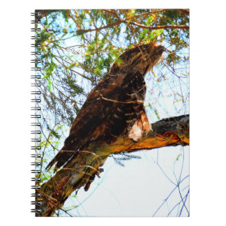 TAWNY FROGMOUTH OWL RURAL QUEENSLAND AUSTRALIA NOTEBOOK
