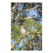 TAWNY FROGMOUTH OWL RURAL QUEENSLAND AUSTRALIA STATIONERY