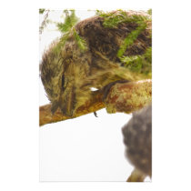 TAWNY FROGMOUTH QUEENSLAND AUSTRALIA STATIONERY