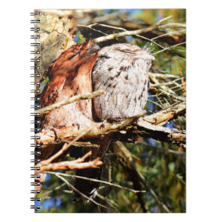 TAWNY FROGMOUTHS IN A TREE QUEENSLAND AUSTRALIA NOTEBOOK