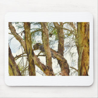 TAWNY FROGMOUTHS QUEENSLAND AUSTRALIA MOUSE PAD