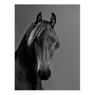 Tawny horse postcard