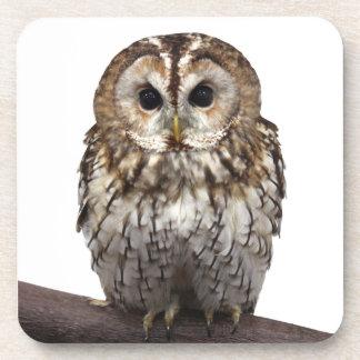 Tawny Owl Drink Coaster
