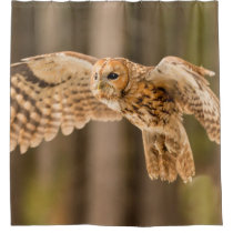 Tawny Owl in flight Shower Curtain