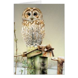 Tawny Owl in the snow fine art card