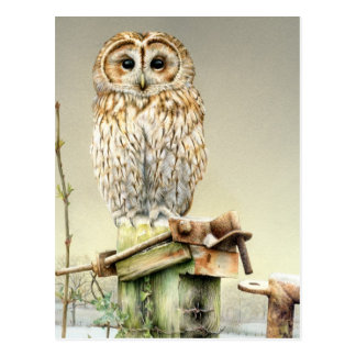 Tawny Owl in the Snow fine art watercolor postcard