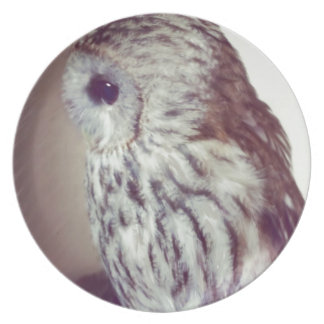 Tawny Owl Painting Dinner Plate