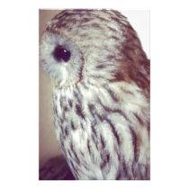 Tawny Owl Painting Stationery