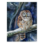Tawny Owl watercolor painting Postcard