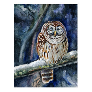 Tawny Owl watercolor painting Postcard