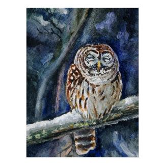 Tawny  Owl watercolor Poster