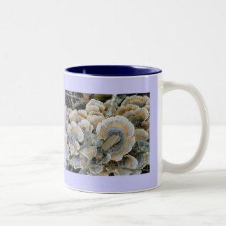Taza azul del hongo de estante