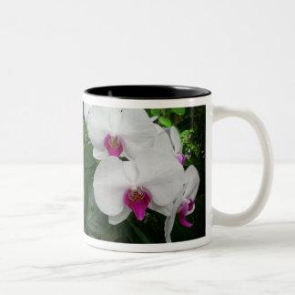 Taza blanca de la orquídea