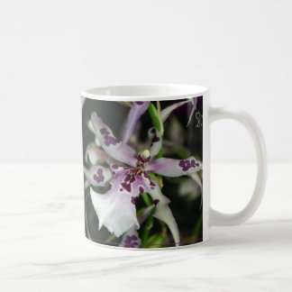 Taza de Beallara de la orquídea