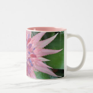 Taza de Bromeliad que sorprende