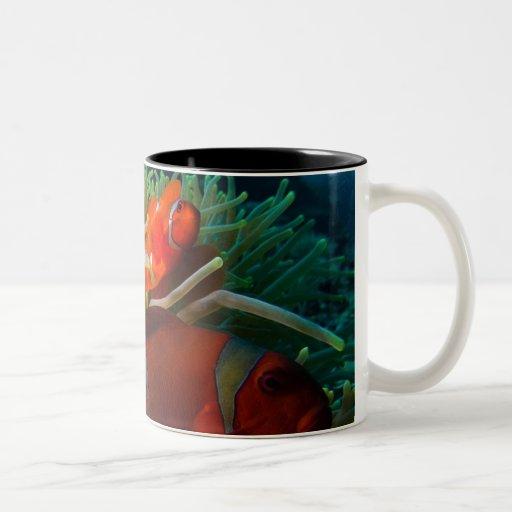 Taza de café de Anemonefish