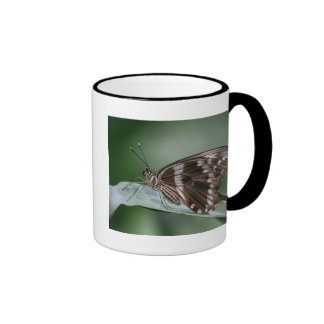 Taza de café de cerámica de la mariposa gigante de