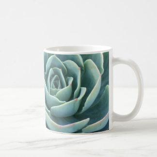 Taza de café de Echeveria