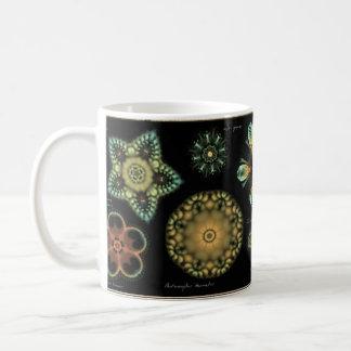 "Taza de café de la diatomea de la ""antigüedad"""