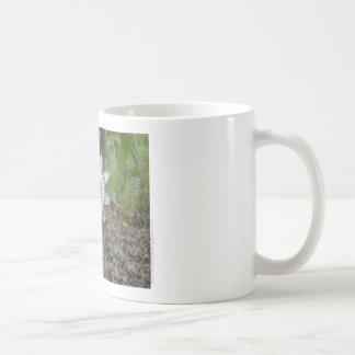 Taza de café de la flor de la pasión - foto