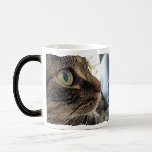 Taza de café de la foto del gato del primer de Emm