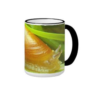 Taza de café del caracol
