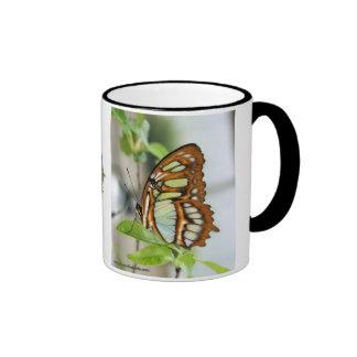 Taza de café del ciclo vital de la mariposa de la