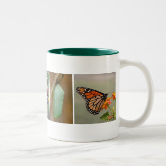 Taza de café del ciclo vital de la mariposa de mon