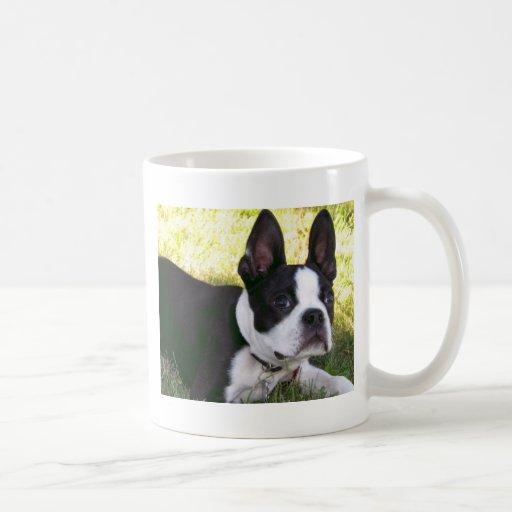 Taza de café del perrito de Boston Terrier