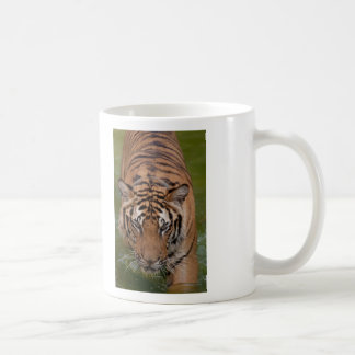 Taza de café del templo del tigre de Tailandia