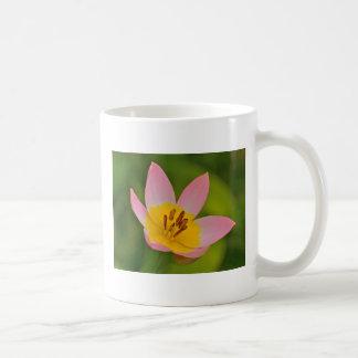 Taza de café del tulipán