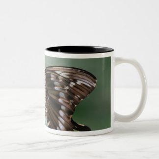Taza de café gigante de la mariposa de Swallowtail