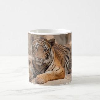 Taza de café - tigre de Tailandia - templo del