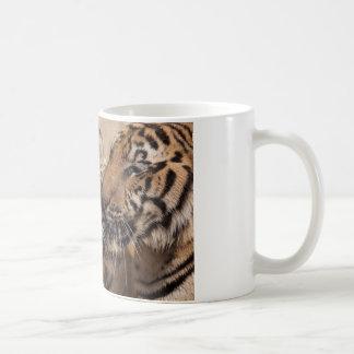 Taza de café - tigres del templo de Tailandia