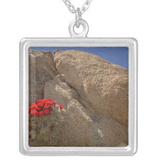 Taza de clarete o cactus del montón del Mojave en Colgante Cuadrado