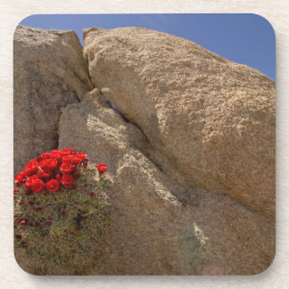 Taza de clarete o cactus del montón del Mojave en  Posavasos