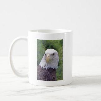 Taza de Eagle calvo