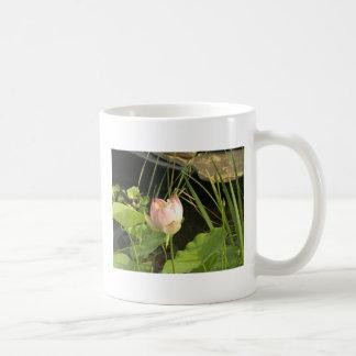 Taza de la flor de Waterlily