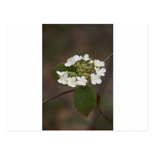 Taza de la flor salvaje postal