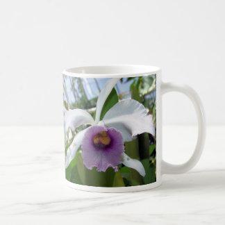 Taza de la orquídea catorce